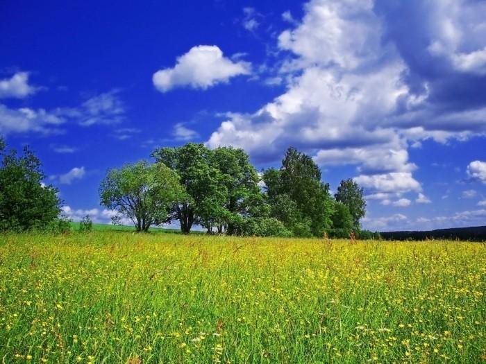 Июнь пейзаж
