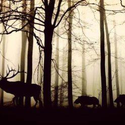 Дикие животные в лесу фото