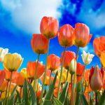 «Гилея» удобрения для сада